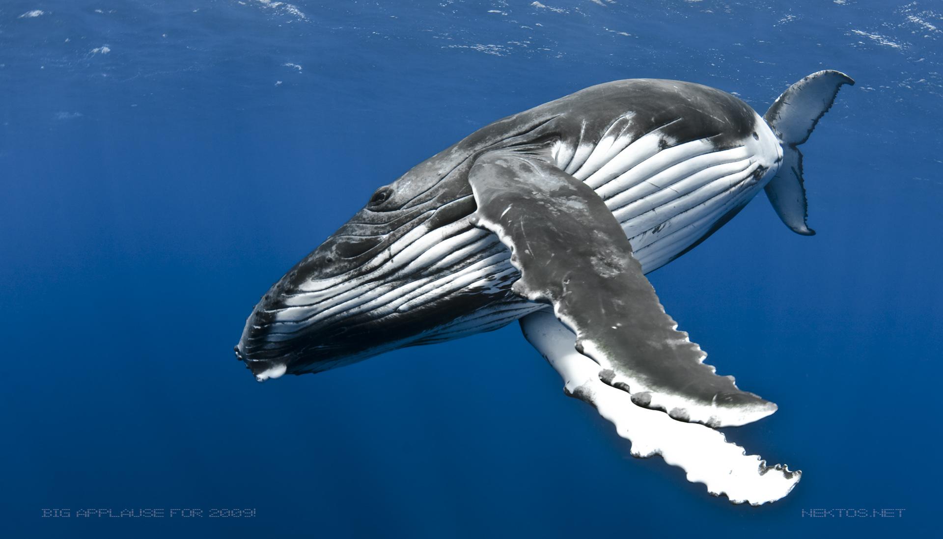 whale2009